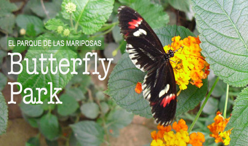 butterfly_park_empuriabrava_papallones_titol_510