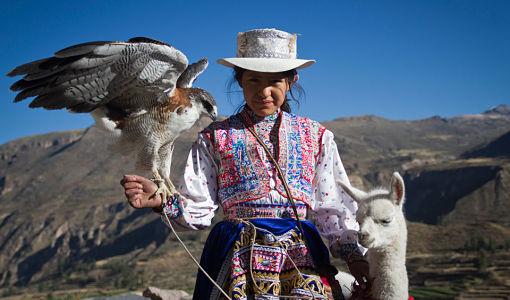 peru_valle_colca_aves_llama_0
