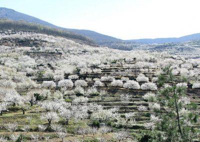 6 DÍAS – VALLE DEL JERTE – CEREZOS EN FLOR Extremadura Histórica en Ave