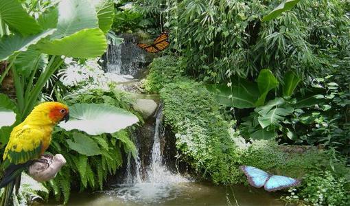 butterfly_park_empuriabrava_papallones