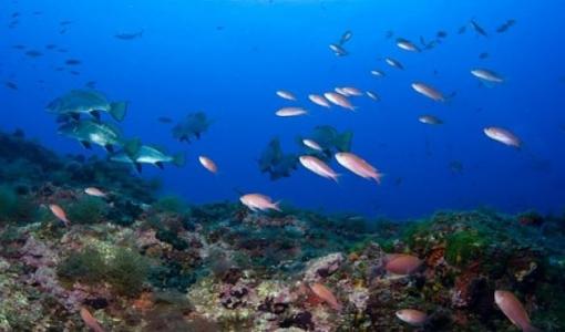 illes_medes_submarina