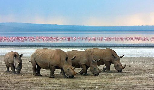 kenya_lago_nakuru_rinocerontes_510