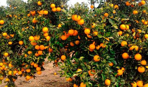 mas_de_doblons_naranjas_510