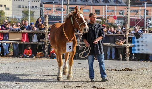 Fira-Cavall-Puigcerda_opt