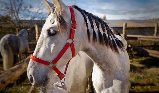 Cavall de la Fira de Puigcerdà